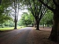 View from the bench (OpenBenches 7213-2).jpg