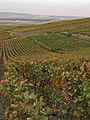 Vignes (Alentours de Verzenay.51) Cl.J.Weber01 (23651591016).jpg