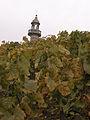 Vignes (Phare de Verzenay.51) Cl.J.Weber02 (23381989910).jpg