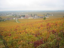 Vignoble Morey Saint Denis.JPG