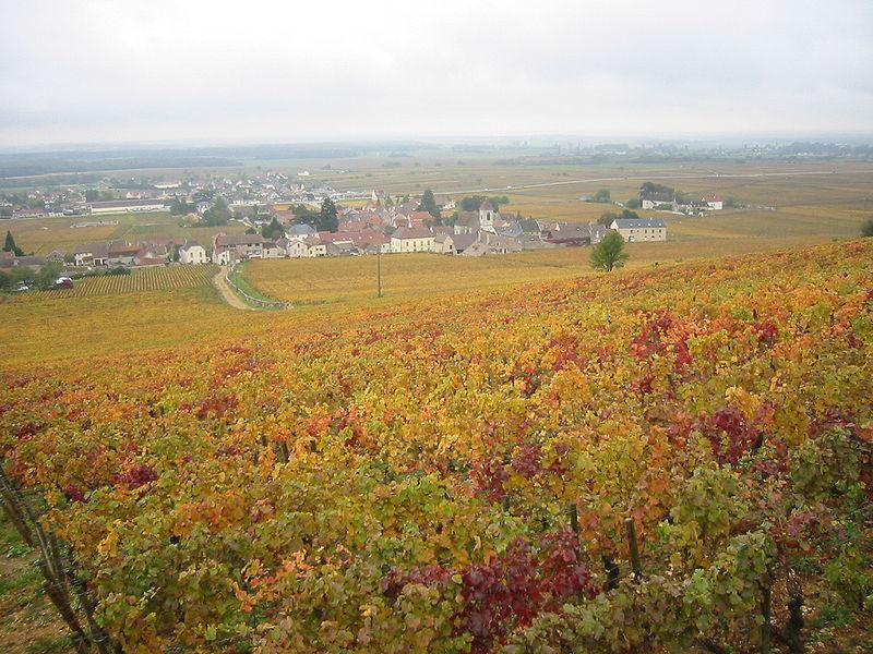 Primiere Cru Burgundy Wine Tours