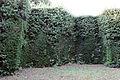 Villa la quiete, giardino, 'stanza' verde con nicchie un tempo con statue 03.JPG