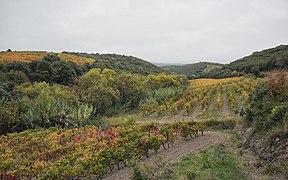 Vineyard in Caussiniojouls.jpg