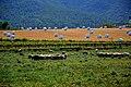 Vinya i camp, Torrelles de Foix. (17402155222).jpg