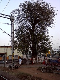 Viveka-ഷൊർണൂർ ആൽ.jpg