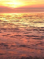 Vollerwiek Pink wadden sea.JPG