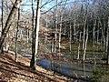 WE beaver pond (8377226373).jpg