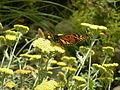 WPZ Butterflies & Blooms 10.jpg