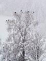 Wagrain Winterwald 020180203 02.jpg