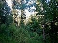 Wald bei Pfalzgrafenweiler - panoramio.jpg