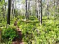Waldmoor-Torfstich, Würzbacher Moor - panoramio (5).jpg