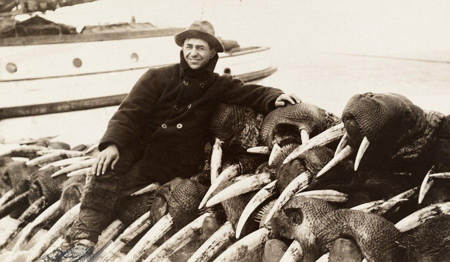 Walrus hunter 1911