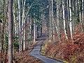 Wanderweg bei Steinenbronn - panoramio.jpg