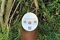 Weener - Hessepark - Hessepark + Juniperus virginiana 01 ies.jpg