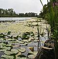 Welland River.jpg