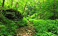 West Branch Research and Demonstration Forest (18) (28059353146).jpg