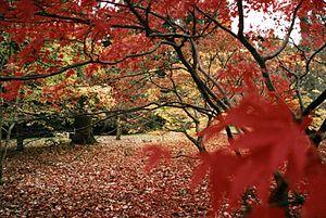 Westonbirt Arboretum - The arboretum in autumn