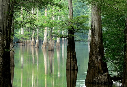 The White River in eastern Arkansas White River, Arkansas.jpg