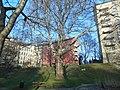 Wiener Naturdenkmal 457 - Morgenländische Platane (Döbling) c.JPG