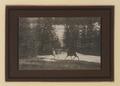 Wild deer, Banff (HS85-10-23788) original.tif