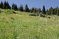 Wilder Gulch Trail (6129306722).jpg