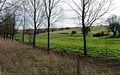 Willow plantation and fields near Brantham Bridge - geograph.org.uk - 362707.jpg