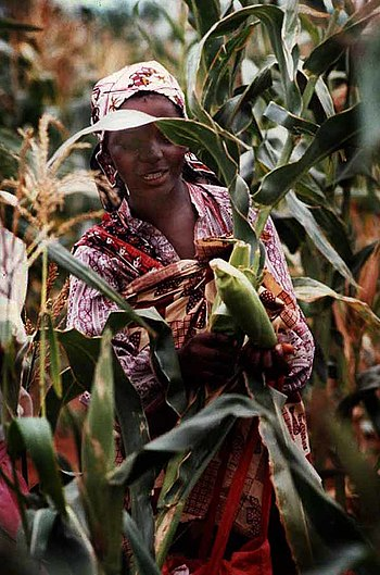 Women in Mozambique with maize.