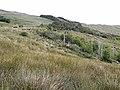 Wooded hillside above Tawnyard Lough - geograph.org.uk - 1404774.jpg
