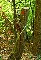 Wooden Head - panoramio.jpg