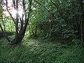 Woodland, Hope - geograph.org.uk - 538682.jpg