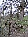 Woodland Boundary Wall near Warren Wood - geograph.org.uk - 358705.jpg
