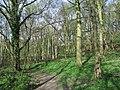 Woodland bordering M1 - geograph.org.uk - 400934.jpg