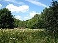 Woodland glade (geograph 2512516).jpg