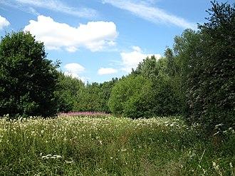 Old Woking - Image: Woodland glade (geograph 2512516)