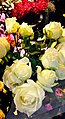 Yellow roses spice you up .JPG