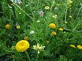 Yellow wildflowers.jpg