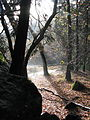 Yosemite Trees (3021487732).jpg