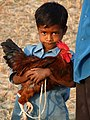Young Boy with Fighting Cock - Jotisampur Village - Sundarban District - South of Kolkota - India - 01 (12346785954).jpg