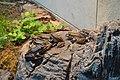 Zoo de Vincennes, Avril 2014 - Rassemblement de grenouilles.jpg