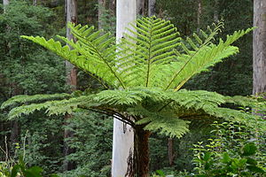 (1)Fern tree Lane Cove River.jpg