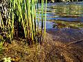(8) Reeds.jpg
