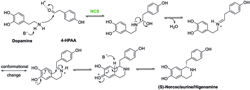 Synthesis of (S)-Higenamine by NCS and its mechanism.