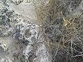 Ελαφόνησος DSCN0221.jpg
