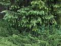Ботанічний сад ДНУ 27.JPG