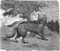 Волк (БЭАН).png