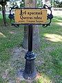 Гомель. Парк. Дуб красный. Фото 01.jpg