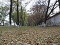 Деревья на Лутугинской - panoramio.jpg