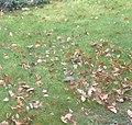 Зеленый дятел в московской области.JPG