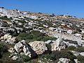 Каменистость - panoramio.jpg