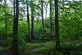 Колекція лісовода Вінтера DSC 0053.jpg